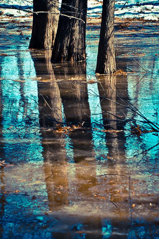 Trinity trees